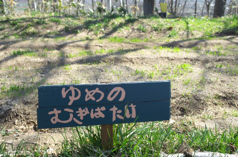f:id:nijinotsumiki:20190506225030j:plain