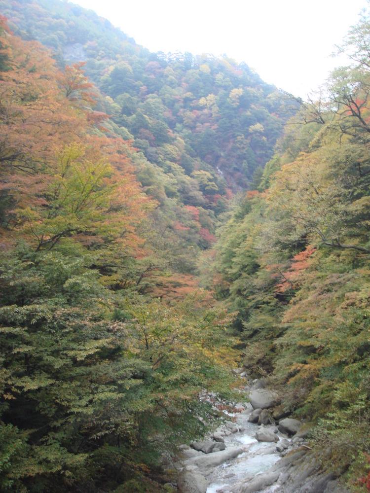 f:id:nikkokisuge:20121027123130j:image:w360:left