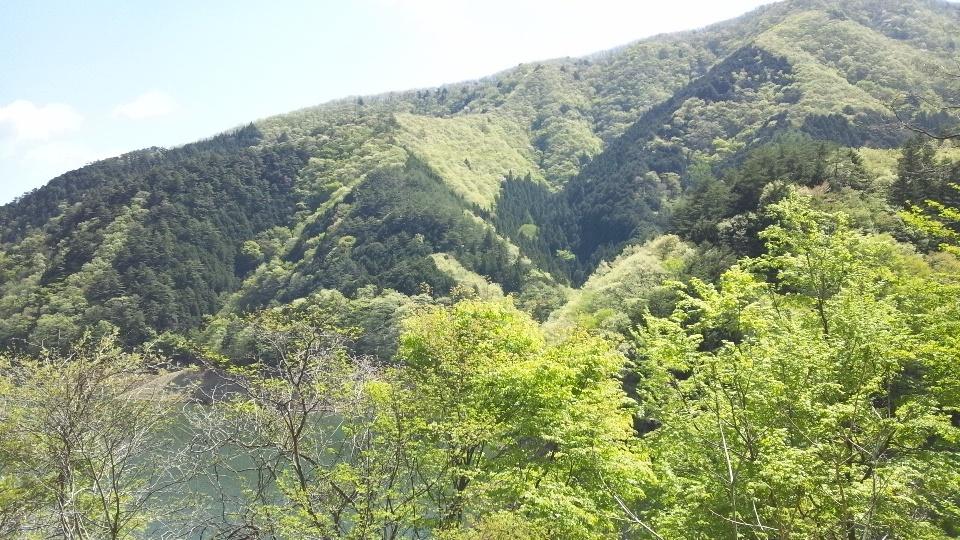f:id:nikkokisuge:20130427100431j:image:w360:right