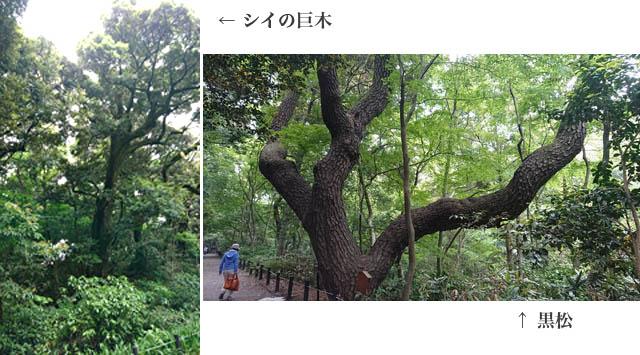 f:id:nikkokisuge:20180503144757j:image