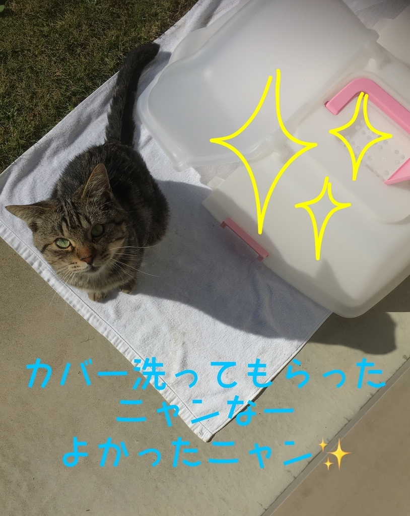 f:id:niko25neko3:20181105201504j:plain