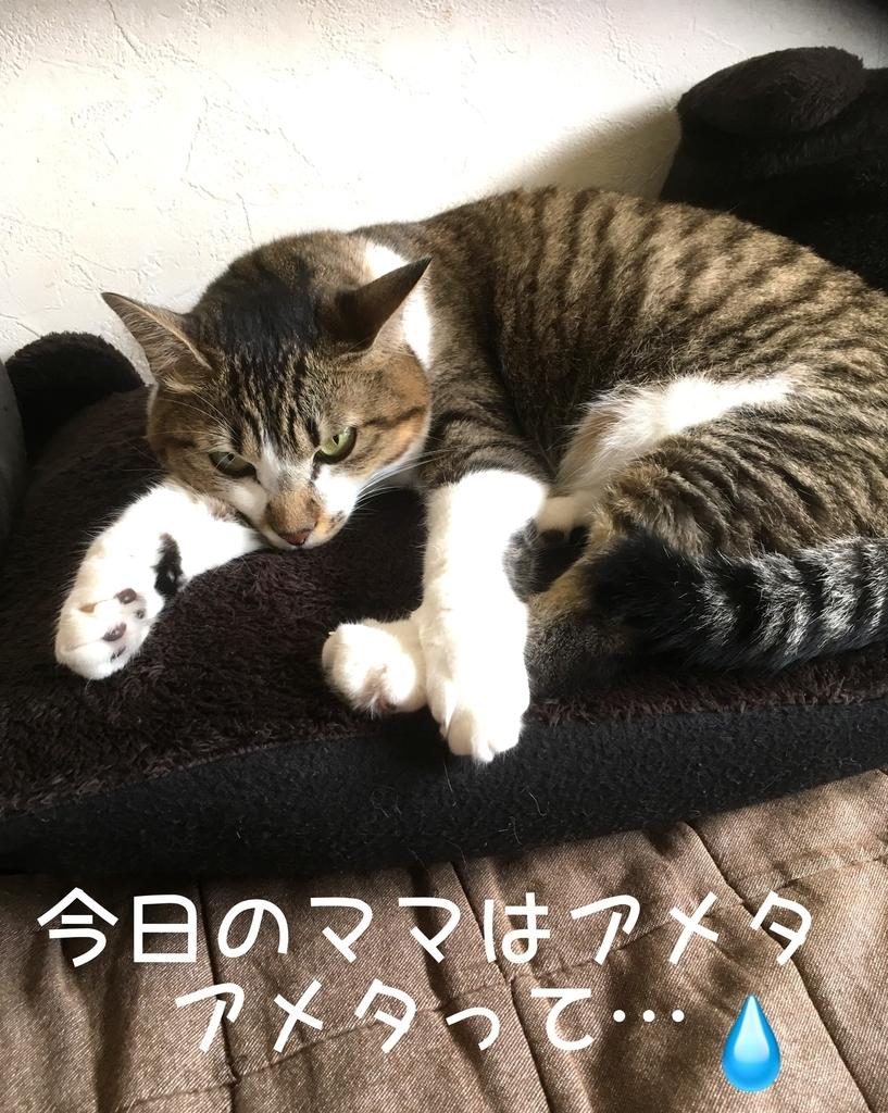 f:id:niko25neko3:20181108201204j:plain