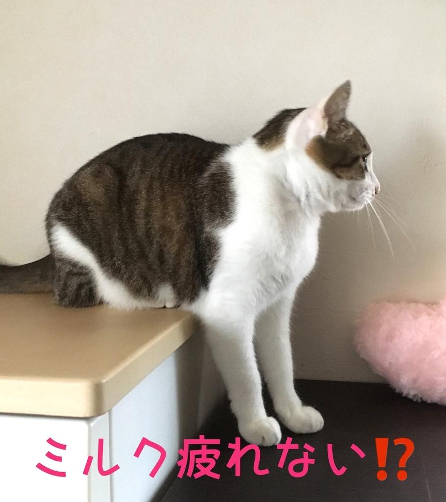 f:id:niko25neko3:20181119204322j:plain