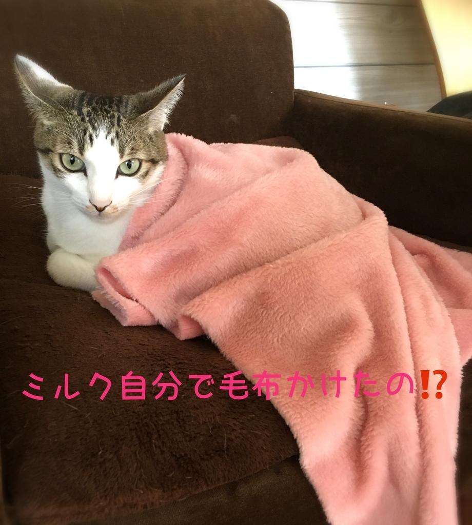 f:id:niko25neko3:20181119204616j:plain