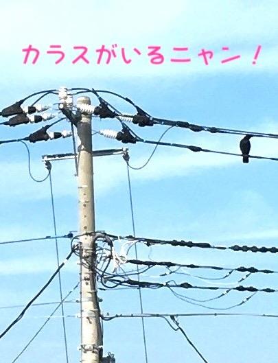 f:id:niko25neko3:20181126195826j:plain