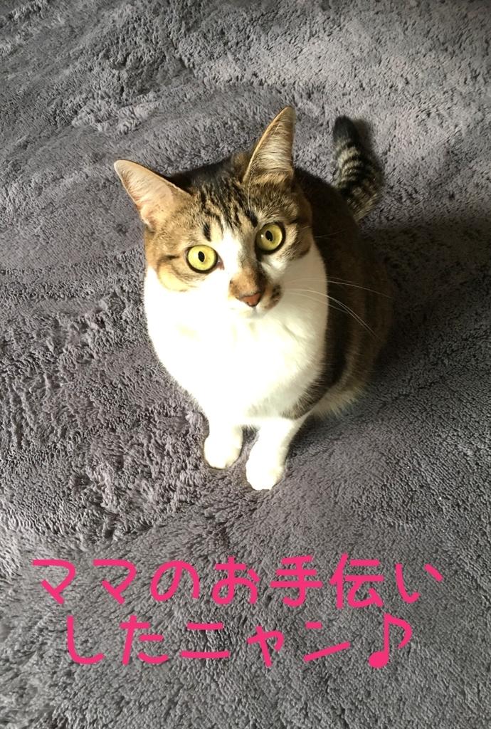 f:id:niko25neko3:20181127215141j:plain