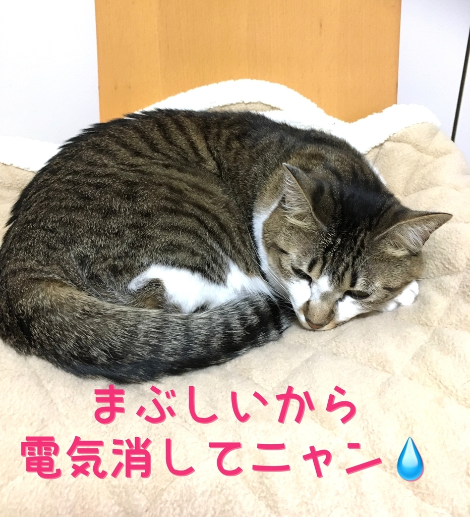 f:id:niko25neko3:20181201213814j:plain