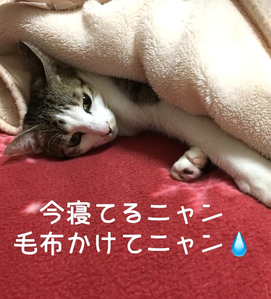 f:id:niko25neko3:20181201214136j:plain