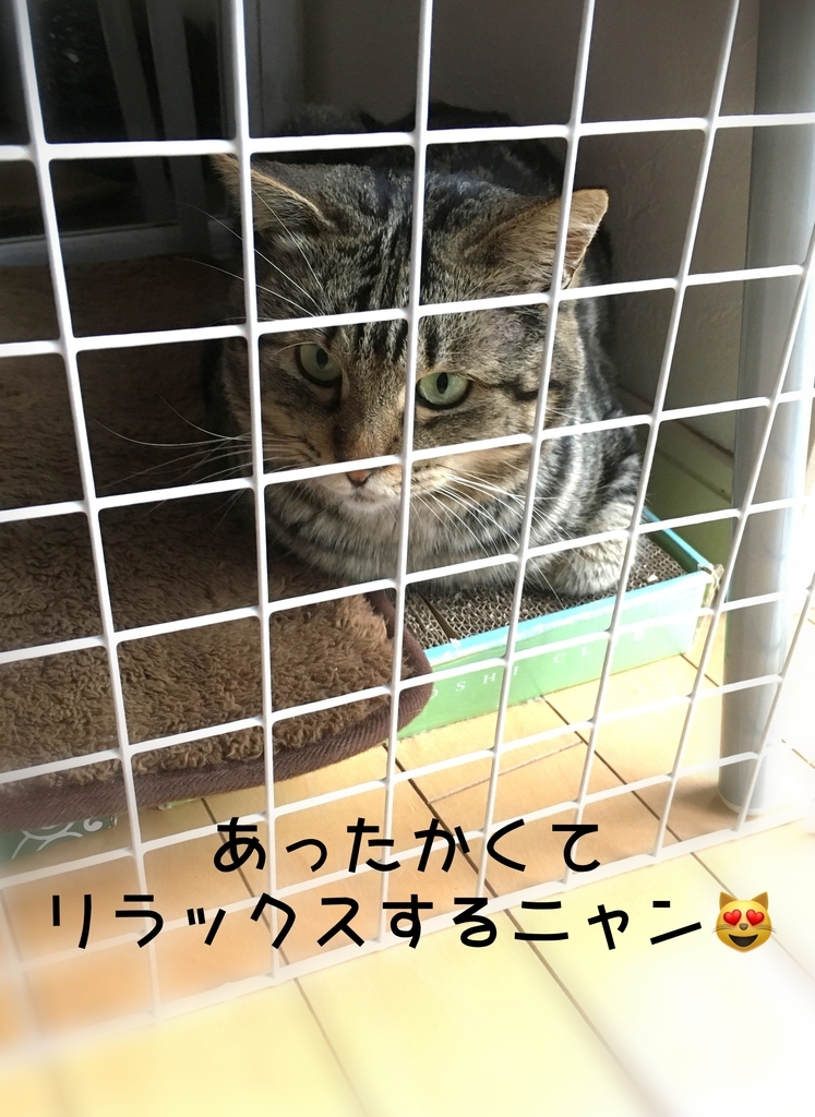 f:id:niko25neko3:20181208204248j:plain