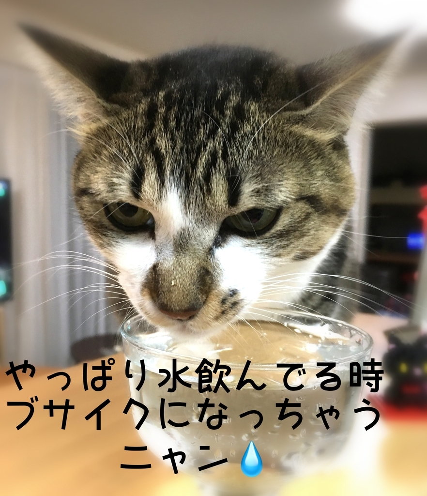 f:id:niko25neko3:20181208204408j:plain