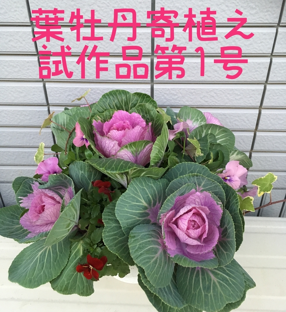 f:id:niko25neko3:20181214221742j:plain