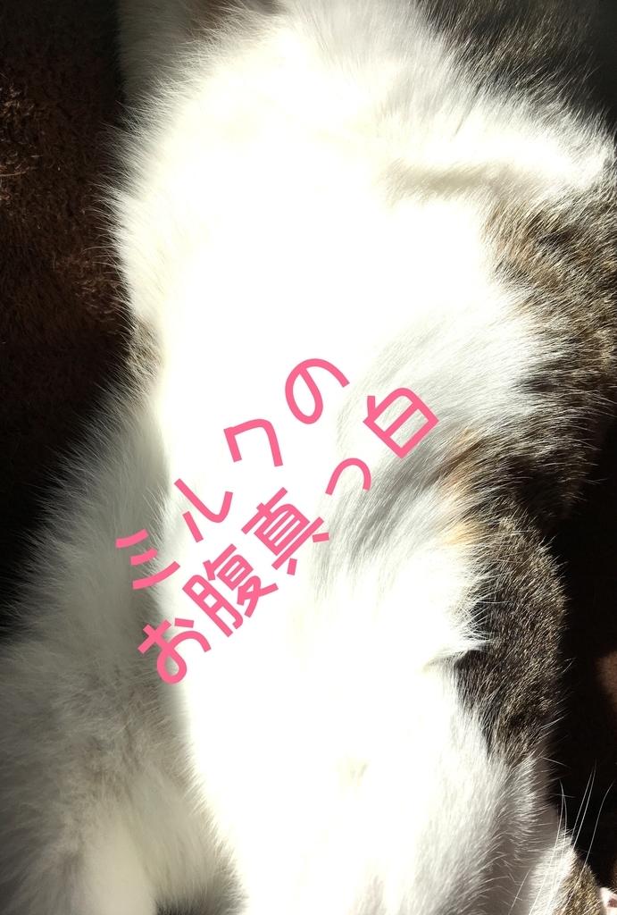 f:id:niko25neko3:20190104195748j:plain
