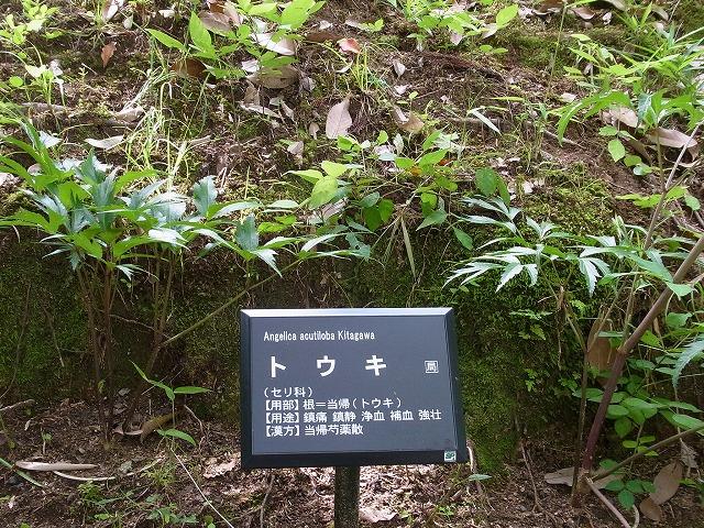f:id:nikomakoyoga:20180606163046j:plain
