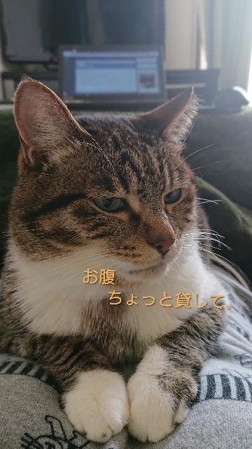 f:id:nikonikopun0813:20190319153953j:image