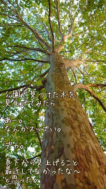 f:id:nikonikopun0813:20201018134526j:image