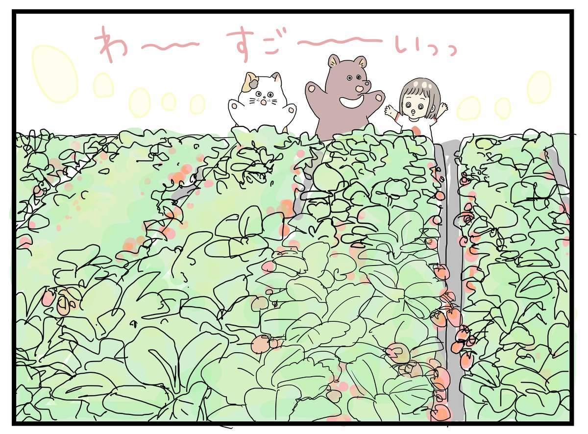 苺畑に来て喜んでる娘と猫と熊のイラスト