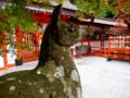 [「神社][狛犬]大原野神社/鹿