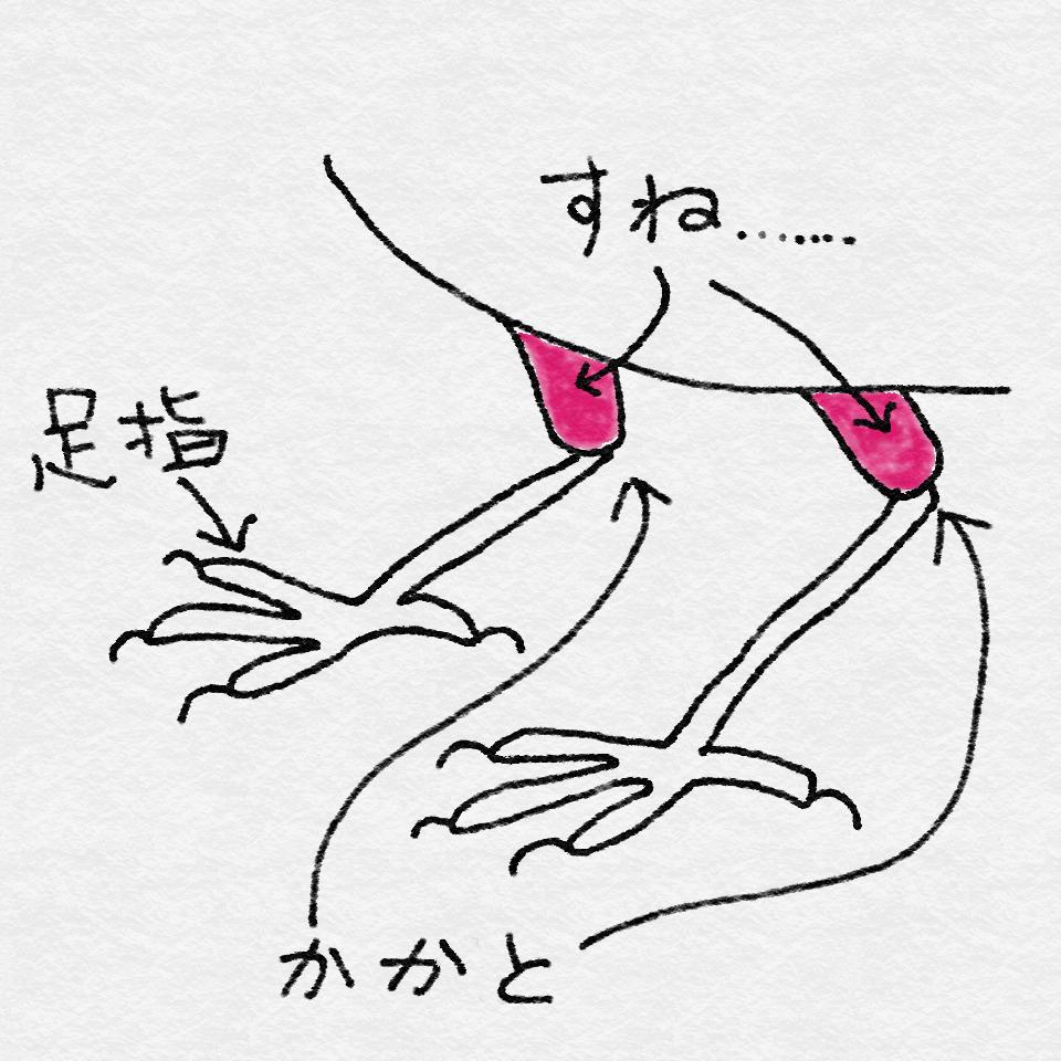 f:id:nikosuzumemi:20160629164013p:plain