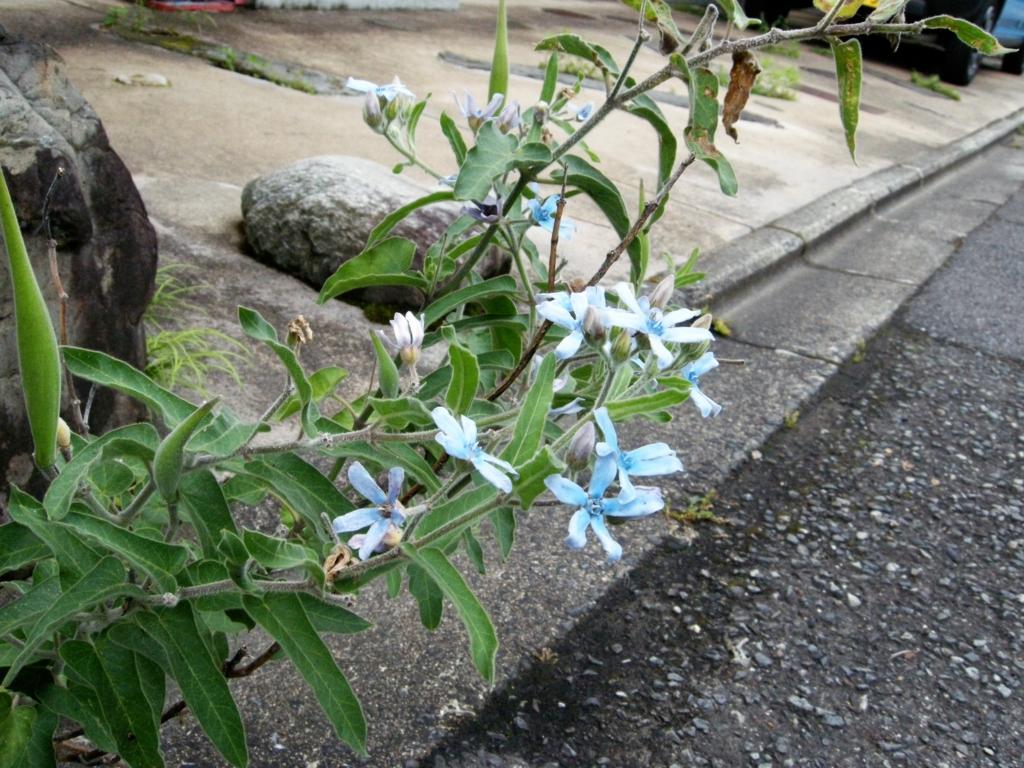 f:id:nikosuzumemi:20160711063154j:plain