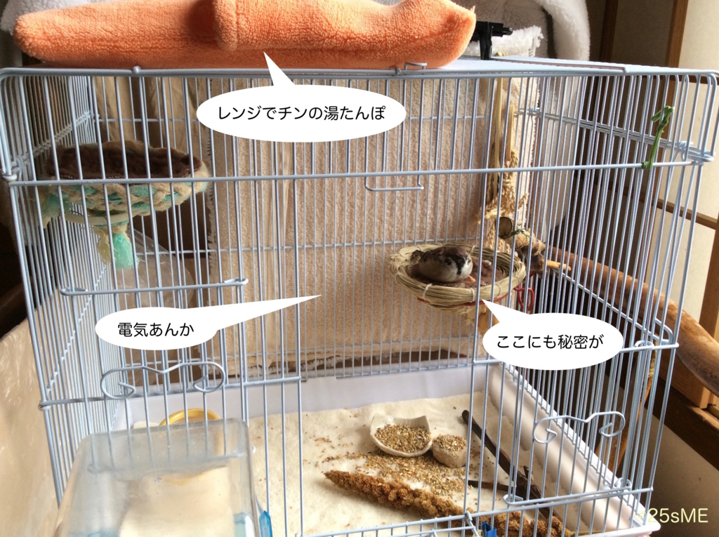 f:id:nikosuzumemi:20161025171219j:plain