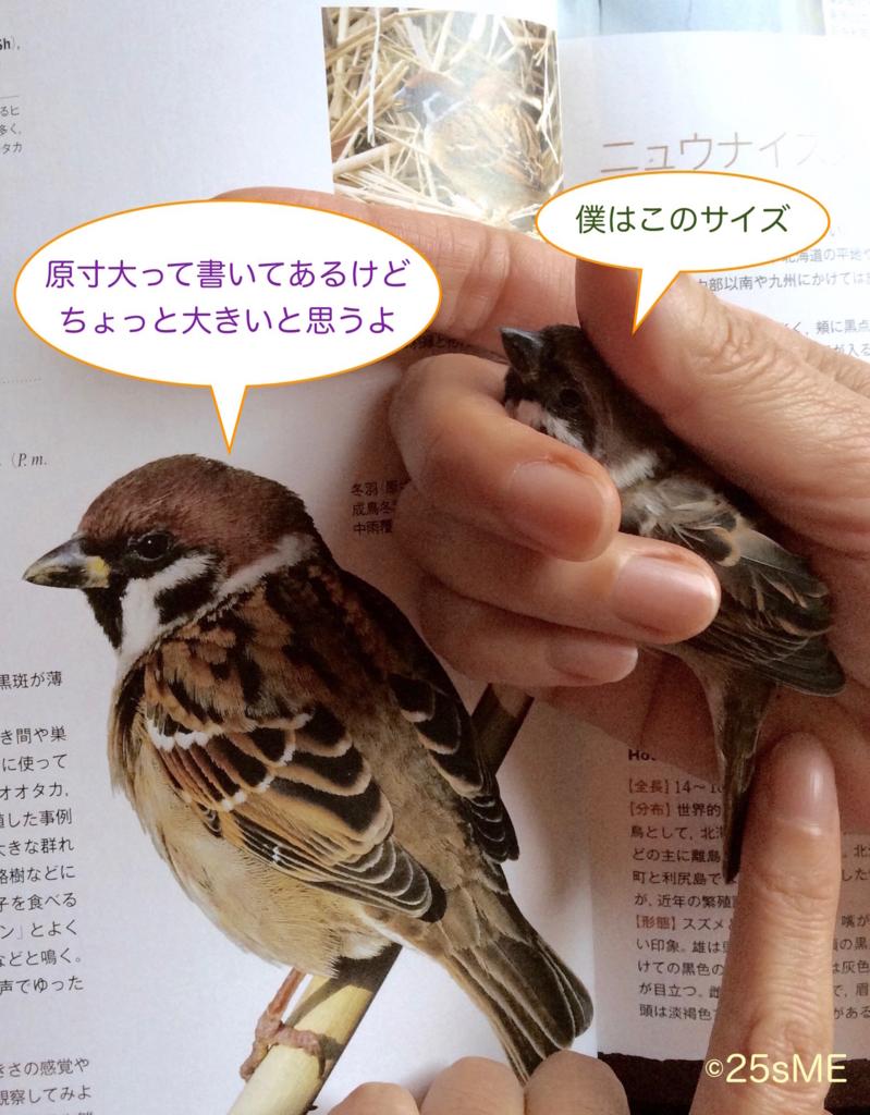 f:id:nikosuzumemi:20161121165658j:plain
