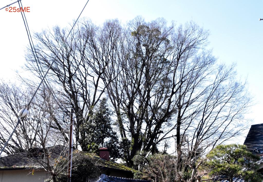 f:id:nikosuzumemi:20170214212612j:plain