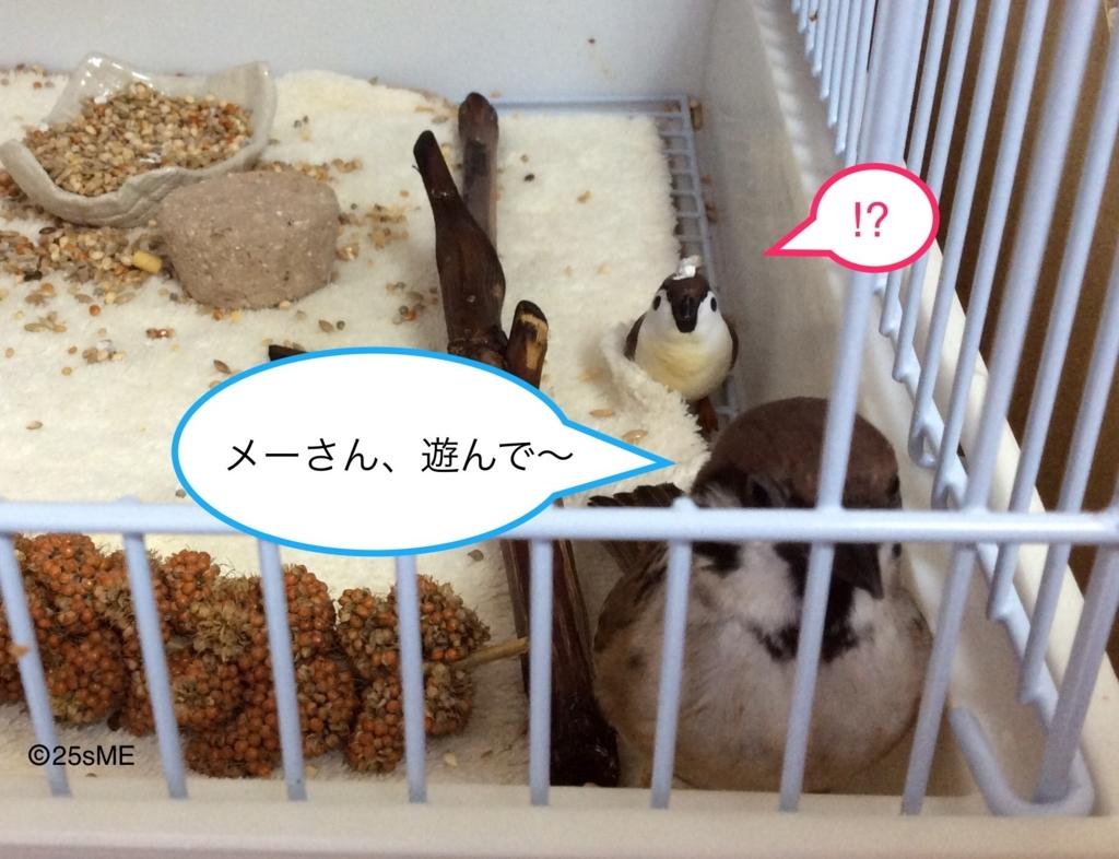 f:id:nikosuzumemi:20170623110507j:plain
