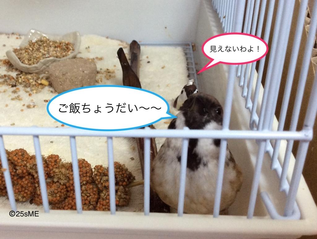 f:id:nikosuzumemi:20170623110532j:plain