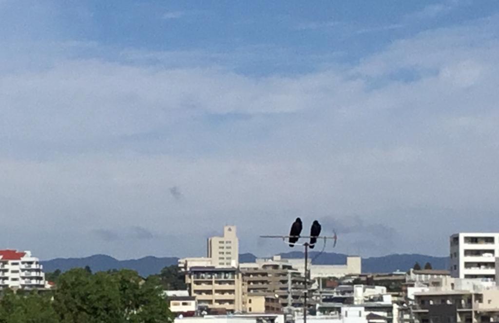 f:id:nikosuzumemi:20171019111312j:plain