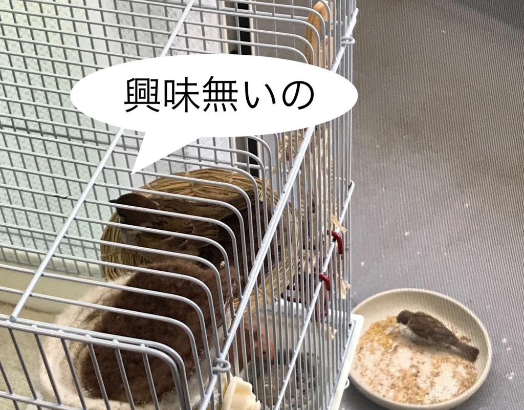 f:id:nikosuzumemi:20180818120806j:plain