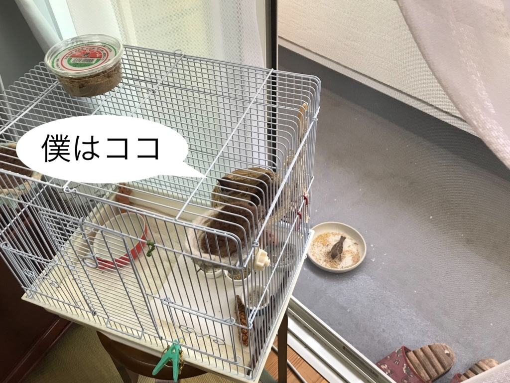 f:id:nikosuzumemi:20180818120931j:plain