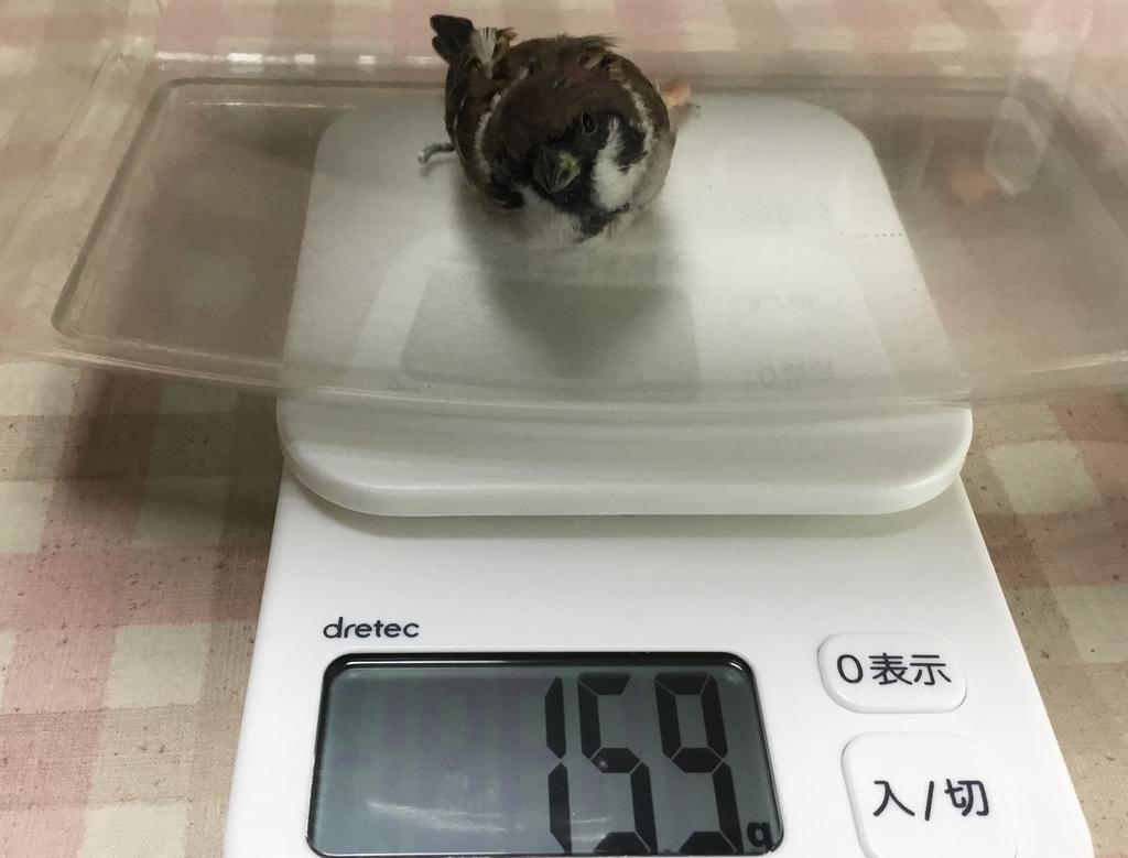 f:id:nikosuzumemi:20180925200800j:plain