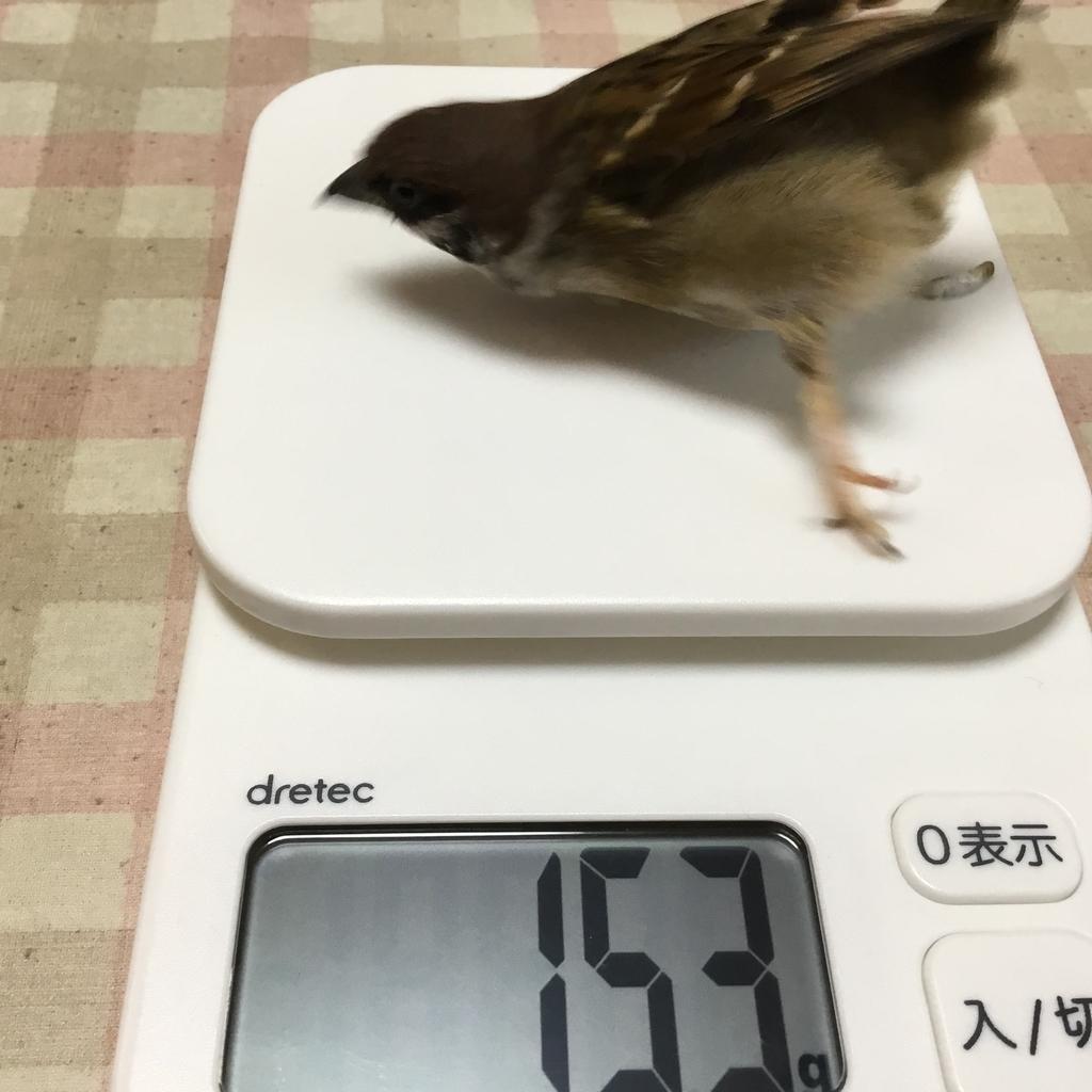 f:id:nikosuzumemi:20181214093731j:plain
