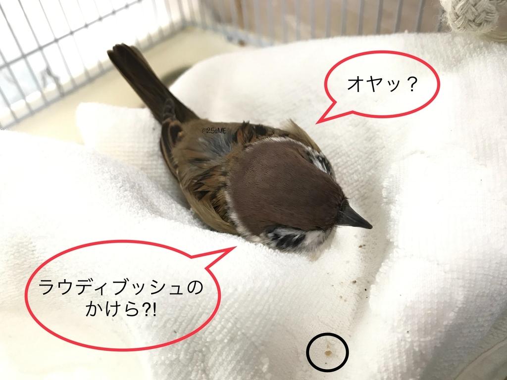 f:id:nikosuzumemi:20181224112024j:plain