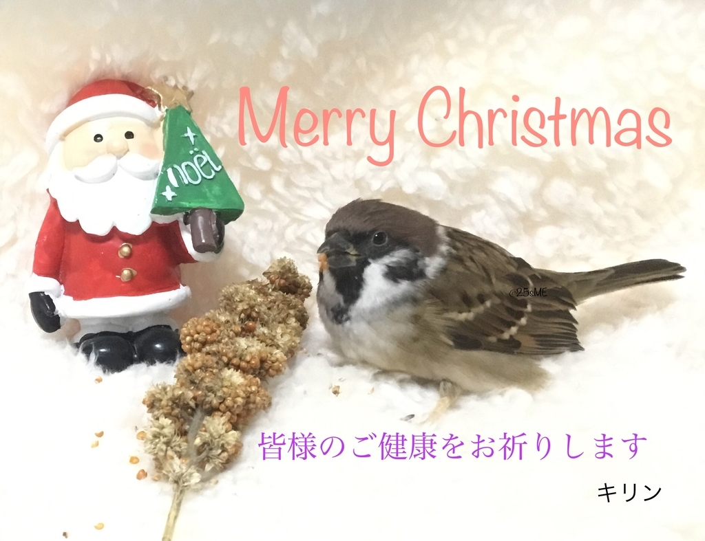 f:id:nikosuzumemi:20181224153227j:plain