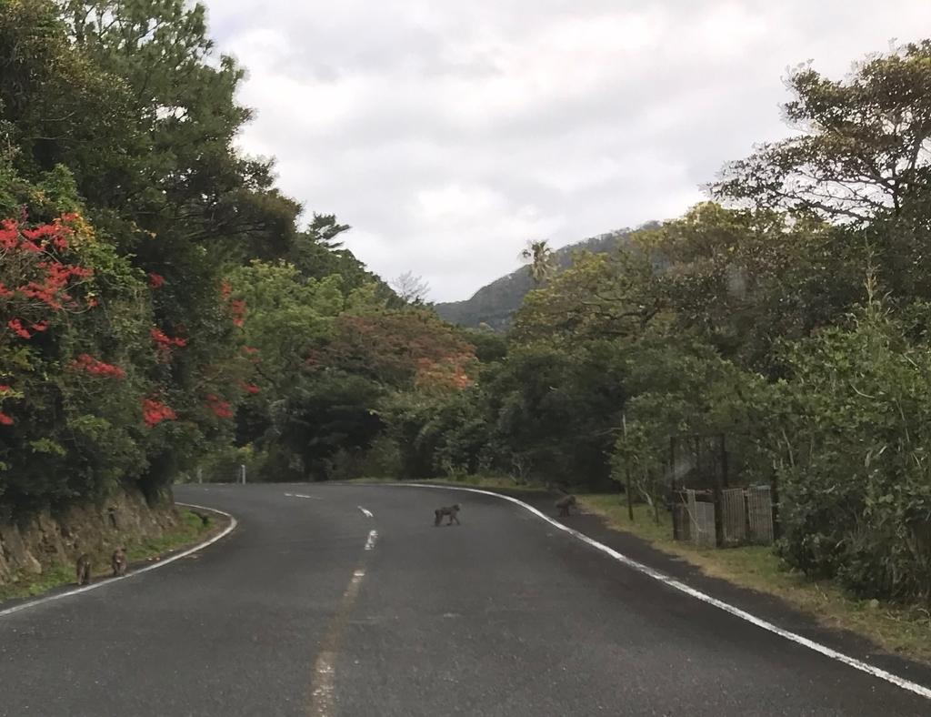 f:id:nikosuzumemi:20190111125141j:plain