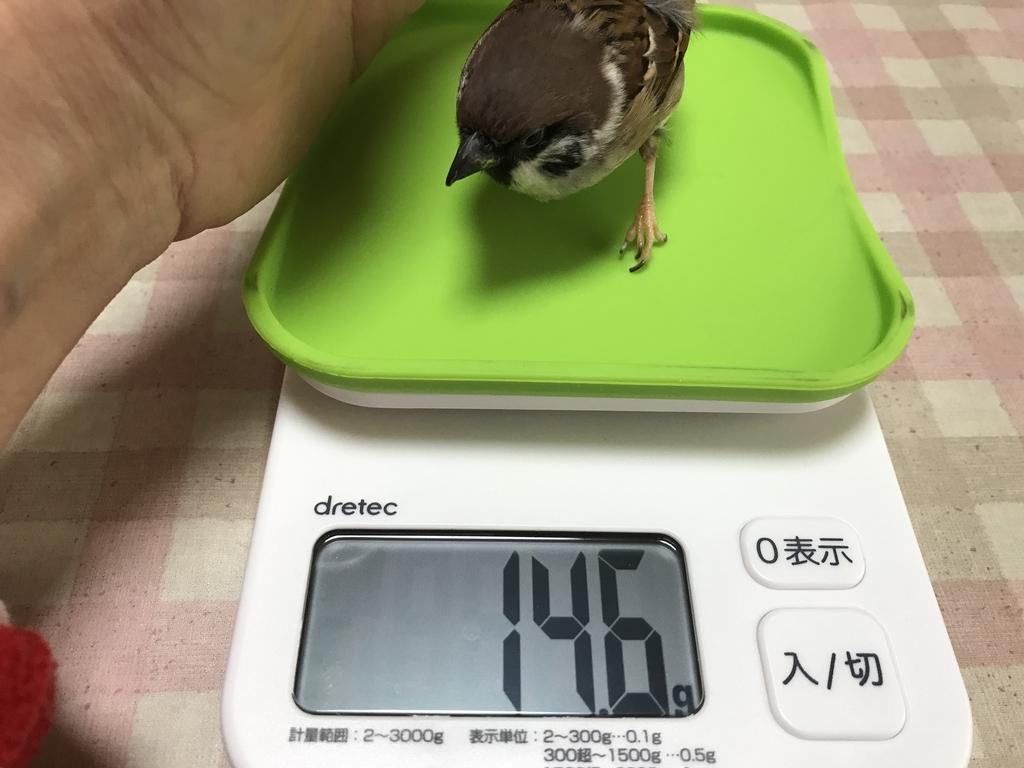 f:id:nikosuzumemi:20190220133424j:plain