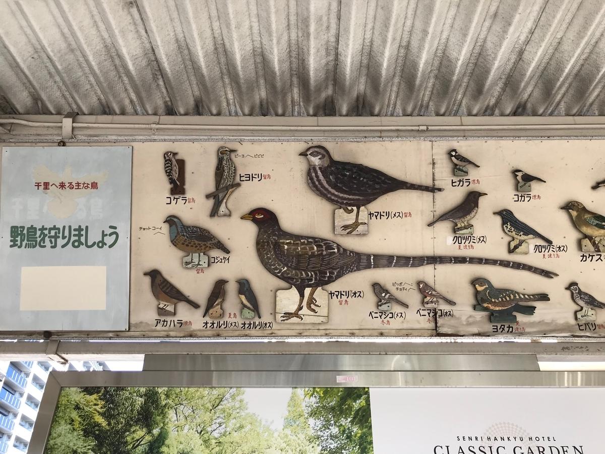 f:id:nikosuzumemi:20191014140310j:plain
