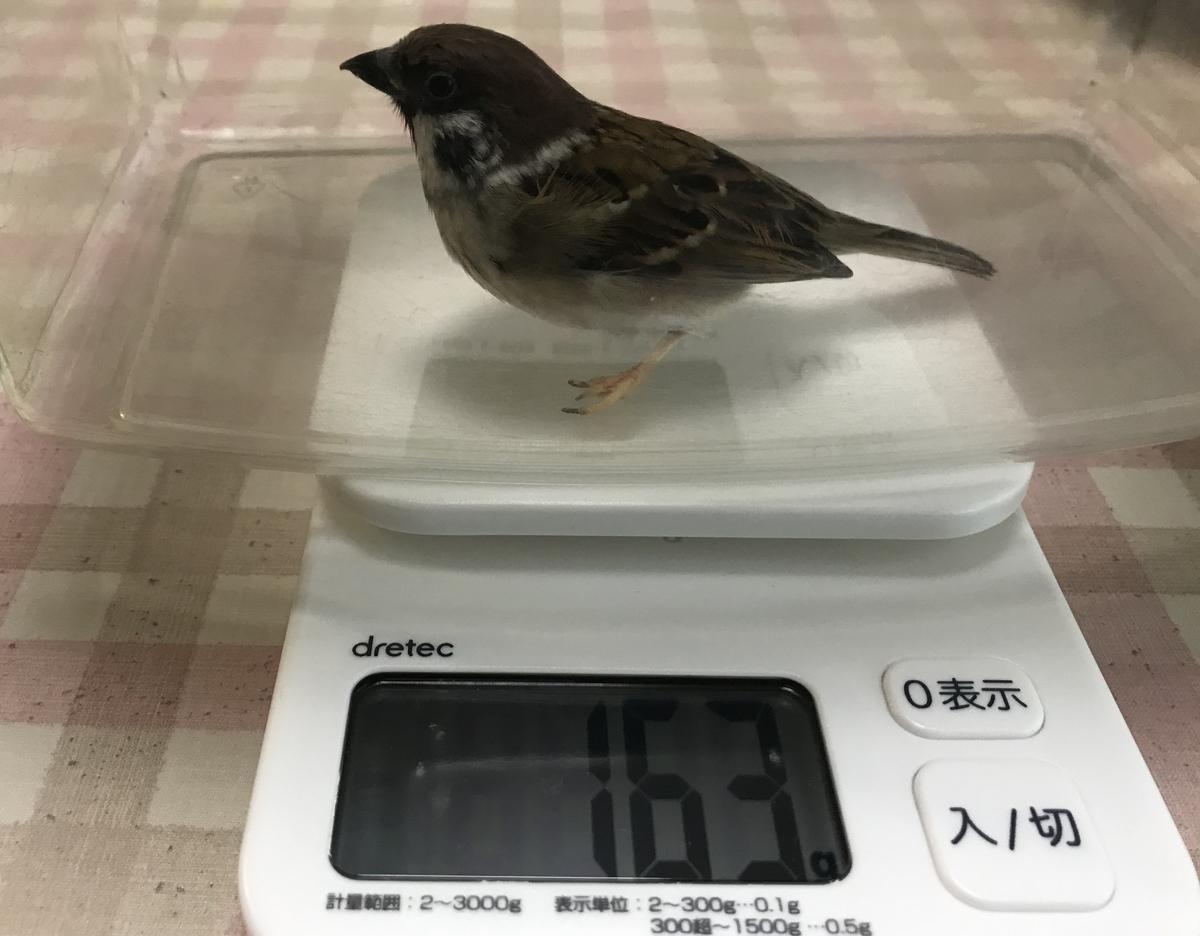 f:id:nikosuzumemi:20200111143943j:plain