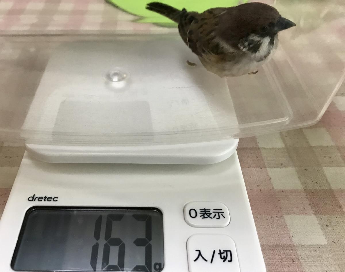 f:id:nikosuzumemi:20200321120851j:plain