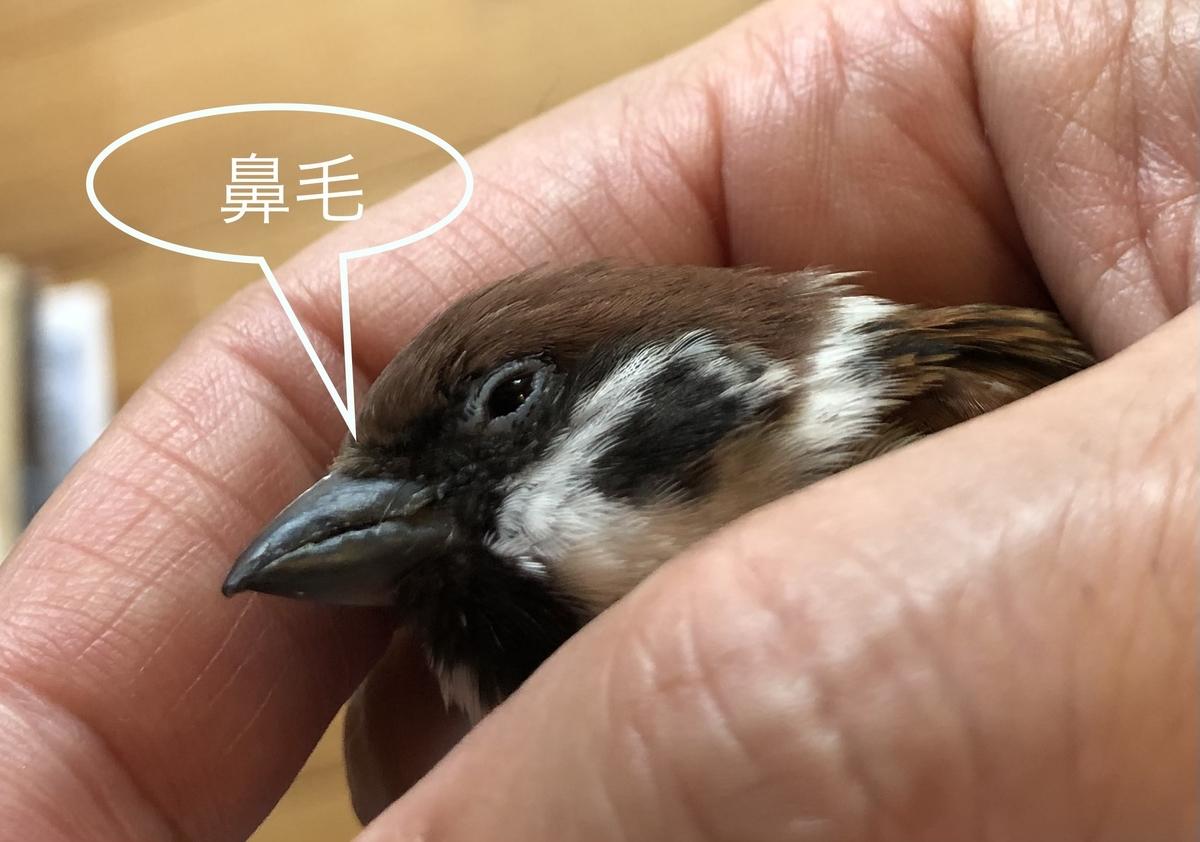 f:id:nikosuzumemi:20210616090745j:plain