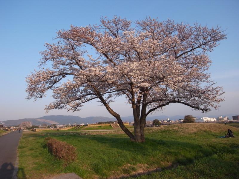 f:id:nikuniku-c:20090405172156j:image