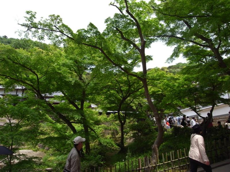 f:id:nikuniku-c:20090504115154j:image