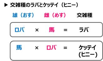 f:id:nil-blog:20210508130008p:plain