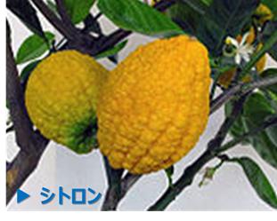 f:id:nil-blog:20210726103311p:plain