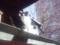 柳森神社の猫3