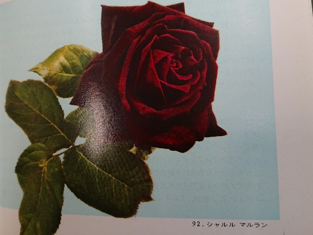 f:id:ninasimone:20210131223421j:image
