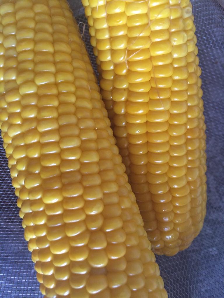 砂糖zuckerトウモロコシ maisを茹でた