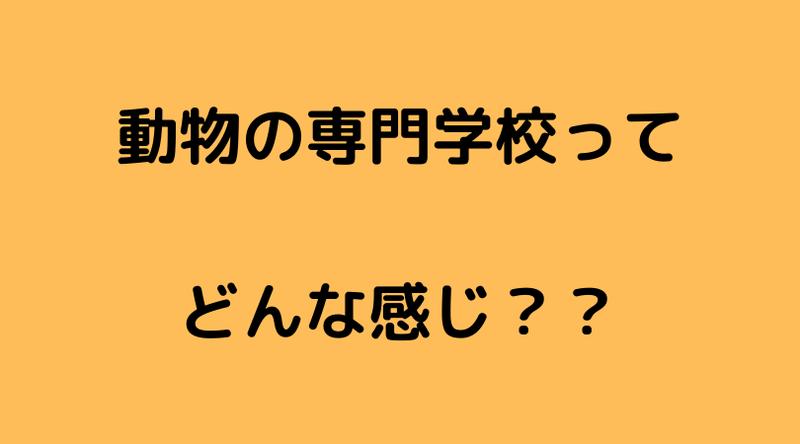 f:id:ninjalifegudaguda:20210707182923p:plain