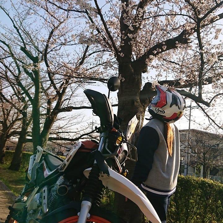f:id:ninjamegumaru:20200406173311j:plain
